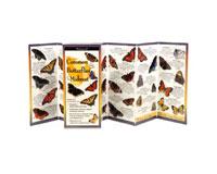 Common Butterflies of the Midwest-LEWERSBUW119