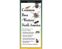 Common Bees of Western North America Folding Guide by Joseph S. Wilson & Olivia Messinger Carril-LEWERSBWN114