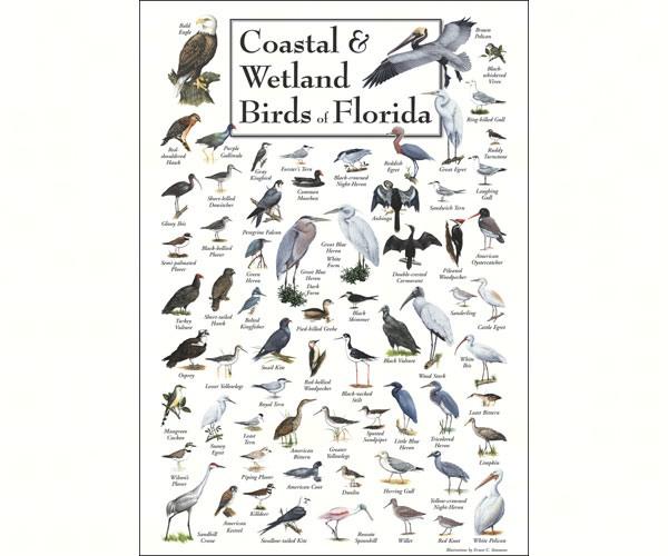 Coastal & Wetland Birds of Florida Poster