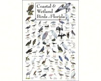 Coastal & Wetland Birds of Florida Poster-LEWERSCBPT124