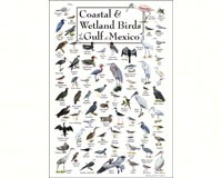 Coastal & Wetland Birds of Gulf of Mexico Poster-LEWERSCGPT183