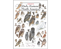 Owls of Eastern North America Poster-LEWERSDEPT117