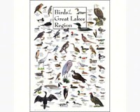 Birds of Great Lakes Greeting Card-LEWERSGC248
