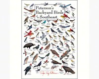 Backyard Birds of SE Greeting Card-LEWERSGC336