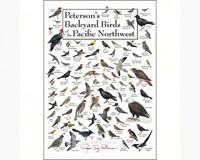 Backyard Birds of Pacific NW Greeting Card-LEWERSGC444