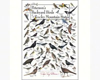 Backyard Birds of Rocky Mountains Greeting Card-LEWERSGC448