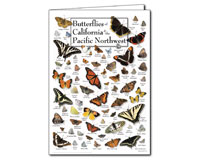 Butterflies of California and the Pacific Northwest Greeting Cards-LEWERSGC548