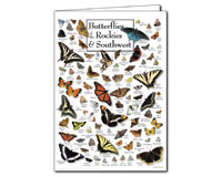 Butterflies of the Rockies and Southwest Greeting Cards-LEWERSGC549