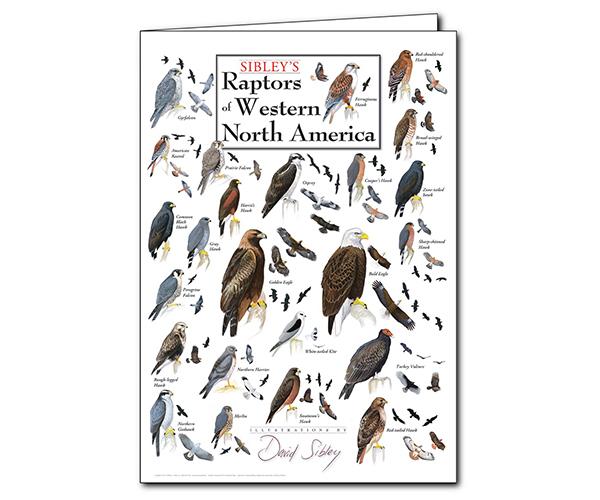 Sibley's Raptors of Western North America Poster Greeting Card