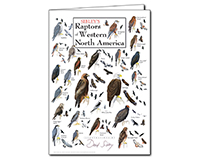 Sibley's Raptors of Western North America Poster Greeting Card-LEWERSGC582