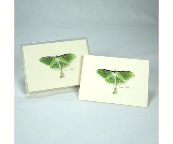 Luna Moth (Boxed Notes)