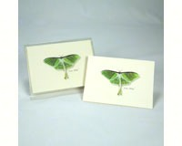 Luna Moth (Boxed Notes)-LEWERSNC120