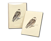 Sibley's Snowly Owl-LEWERSNC163
