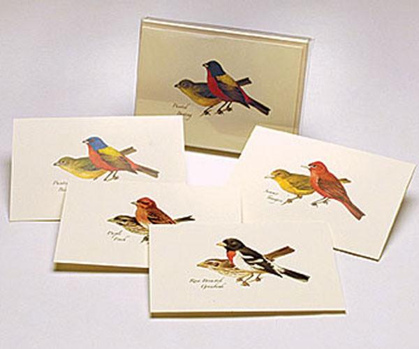 Peterson Bird Notecard Assortment II (2 each of 4 styles)