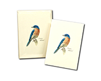 Bluebird II Boxed Notecards-LEWERSNC171