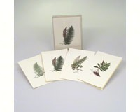 Fern Assortment (4 each of 2 styles) Notecards-LEWERSNC34