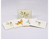 Dragonfly & Damselfly Notecard Assortment II (2 each of 4 styles)-LEWERSNC43