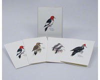 Peterson's Woodpecker Notecard Assortment (2 each of 4 styles)-LEWERSNC46