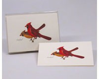 Cardinal Notecard Assortment (8 of 1 style)-LEWERSNC51