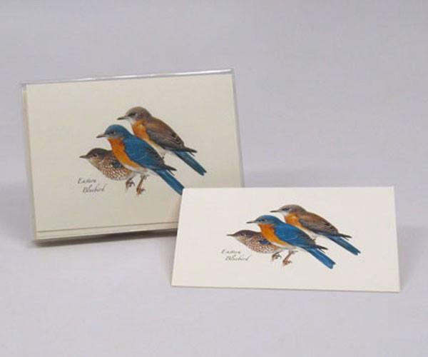 Eastern Bluebird Notecard Assortment (8 of 1 style)