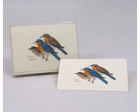 Eastern Bluebird Notecard Assortment (8 of 1 style)-LEWERSNC53