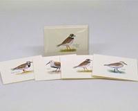 Shorebird Notecard Assortment-LEWERSNC70