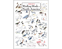 Sibley's Wading Birds of North America Poster-LEWERSWBPT119