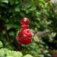 LunaLite  Globe Hummingbird Feeder - Red-EV3502R