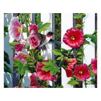 Hollyhocks 1000 Piece Puzzle-GEP101
