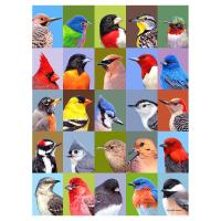 Backyard Bird Friends 1000 Piece Puzzle-GEP110