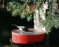 Wild Bird Deluxe Solar Sipper (Red)-HB10008