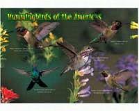 Kids Puzzle Hummingbirds 40 piece Puzzle-IMP52116KZ