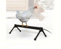 Thermo-Chicken Perch 36 inch 60W-KH2111