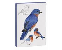 Eastern Bluebird 5x7 Canvas-MAILFG9001