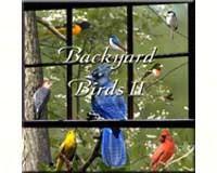 Backyard Birds II-NS053