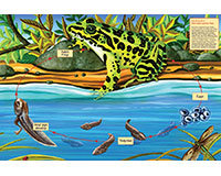 Life Cycle of a Northern Leopard Frog 48 pc Floor Puzzle-OM55103