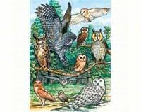 North American Owls Tray Puzzle 35 piece Puzzle-OM58810