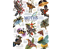 Moth Collection 1,000 pc Puzzle-OM80016