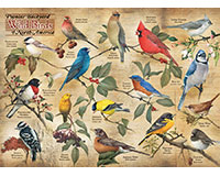 Popular Backyard Birds of N.A. 1000 pc Puzzle-OM80024