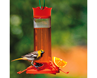 Glass Oriole Feeder-PP209BO