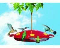 Hummingbird Oasis 16 oz-PP221