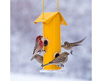 Yellow 4 Port Seed Feeder-PP390