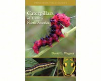 Caterpillars of Eastern North America by David L. Wagner-PR9780691121444