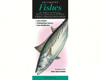Saltwater Fishes of North Carolina, South Carolina, & Georgia by Diane Rome Peebles-QRP162