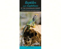 Reptiles & Amphibians of the Chihuahuan Desert-QRP224