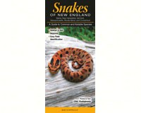 Snakes of New England-QRP261