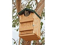 Screech Owl House SE519