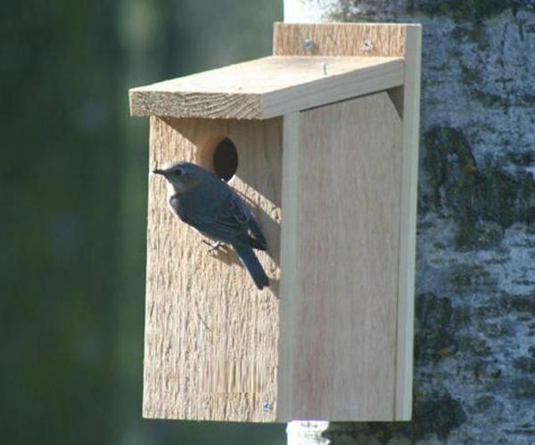 BlueBird House View Thru SE542