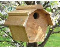 Carolina Wren House All Purpose SE546