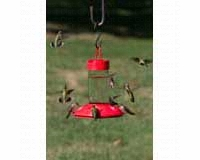 Dr. JB's 16 oz Clean Feeder All Red SE6002